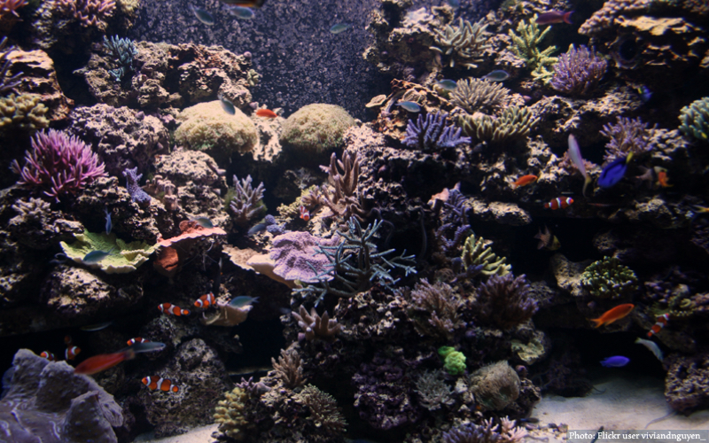 Image of an aquarium with fish and corals